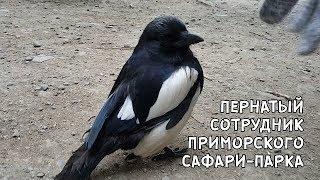 ПЕРНАТЫЙ СОТРУДНИК ПРИМОРСКОГО САФАРИ-ПАРКА