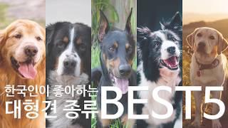 한국이 좋아하는 대형견 강아지 베스트 5