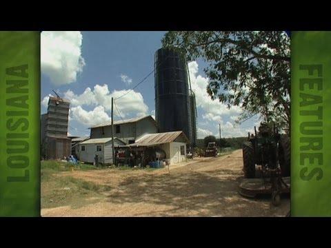 Dairy farm of  E. Feliciana producer Mike Brian (2006)