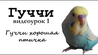 """Учим попугая по имени Гуччи говорить, видеоурок1: """"Гуччи хорошая птичка"""""""