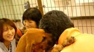 高知県桂浜の土佐犬.