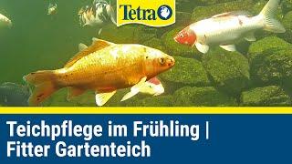 Gartenteich im Frühjahr - Fit für die neue Saison mit Produkten von Tetra