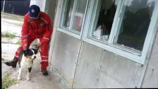 Sar K9 (puppy) Training / Hunting Drive
