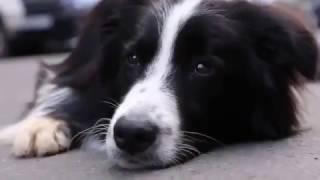Мысли собаки, которую предали хозяева