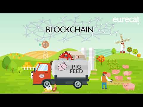 Pork Meat Industry, a blockchain use case