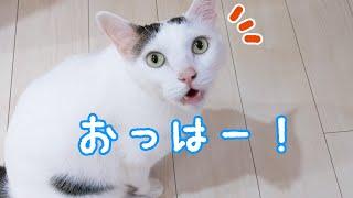 朝は必ず「おはよ」と挨拶する礼儀正しいお喋り猫