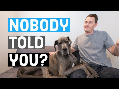 Things NOBODY tells you about owning a Great Dane