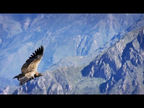 (aerial video) Exploring Peru's epic Colca Canyon.