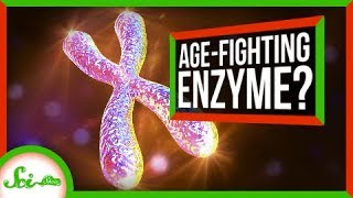 A Cancer Gene May Be More Friendly Than We Thought | SciShow News