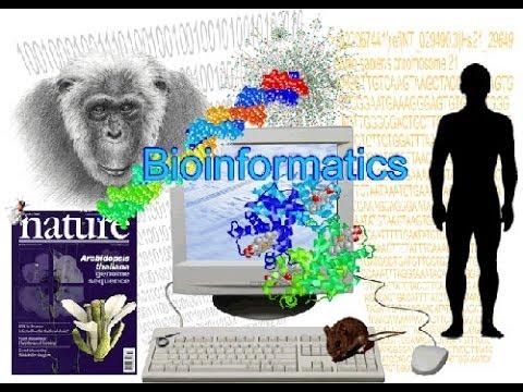 Bioinformatics part 1 What is Bioinformatics