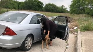 WTF A WOMEN KICKING 4 DOGS OUT OF HER CAR
