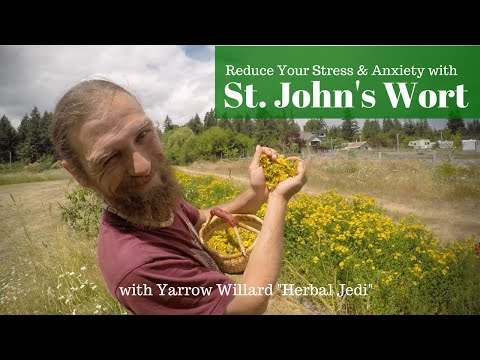 St. Johns Wort, Medicine for the People | w. Herbalist Yarrow Willard | Harmonic Arts