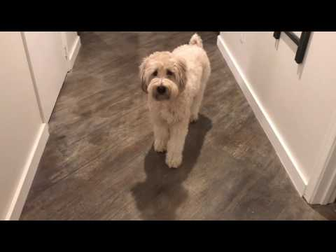 Dog Chases Vacuum