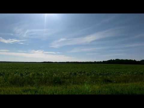 Кукурузное поле, Ивановская