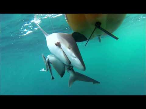 Ultimate Fishing Machine - Hobie Mirage Pedal-Powered Fishing Kayaks