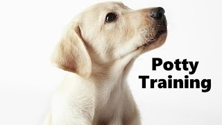 How To Potty Train A Labrador Retriever Puppy - Training Labrador Retriever Puppies - Lab Puppies
