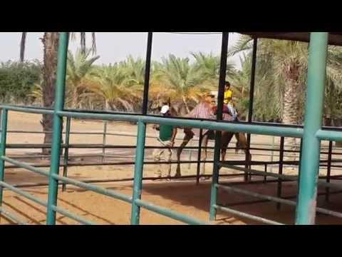 Camel Ride in Sharjah Arabian Wildlife Center