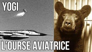 ✈ Une ourse dans le cockpit - Histoires de Vols #1