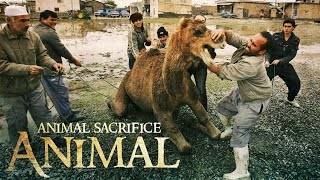 Even Muslims do not know why Muslims sacrifice animals?