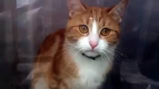 Котейка трогательно просит не уходить