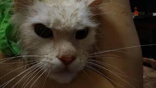 Майкун, хотели, получите. Вырос кот с хорошим характером))) добрая кошка, даже не погладить :)))