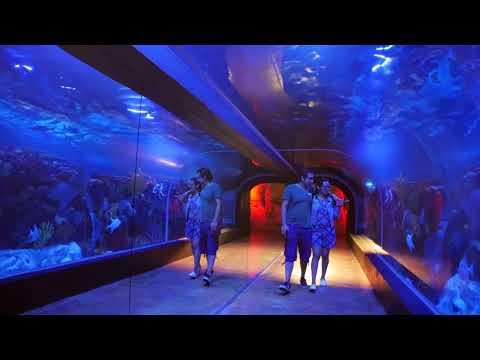El Acuario de Playa del Carmen: Tour This Beautiful Aquarium, book now!