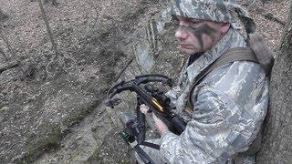 Crossbow Fox Hunt- Mange Fox- Stryker Strykezone 350