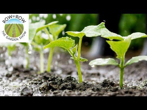 The Basics of Vegetable Garden Irrigation