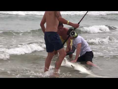 Massive Hammerhead Shark Caught from New Smyrna Beach off the Coast of Florida!