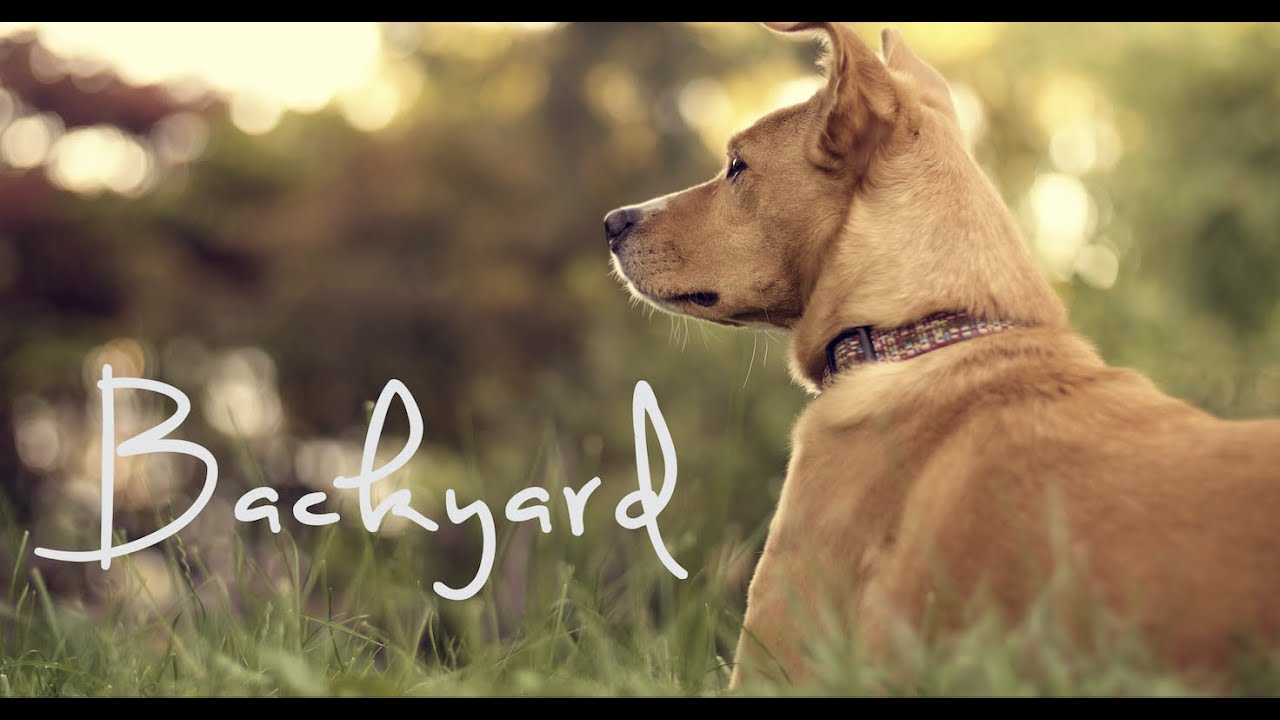 """Backyard"" // Color Grading // GH4 v-log"