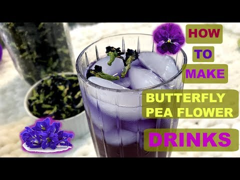 Herbal Butterfly Pea Drinks At Home(Hot and Cold) น้ำอัญชันร้อน, เย็น