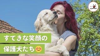 保護犬たちは大家族になった❤️ 犬たちを笑顔にする、個人が始めた保護施設🌱【PECO TV】 thumbnail