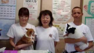 千葉県のお店を探すなら千葉スタイル。 http://chiba.japan-style.tv/ C...