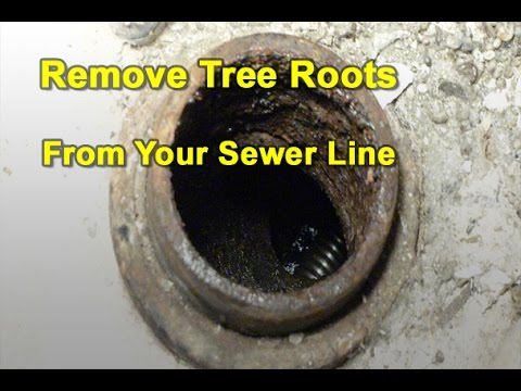 How To Cut Amp Remove Tree Roots From Your Sewer Pipes Youtube