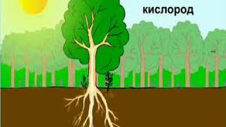 № 2 Питание растений