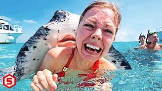 Jangan Dekati 10 Hewan Laut Paling Berbahaya ini, Gigitan Dan Sengatannya Sangat Mematikan!!