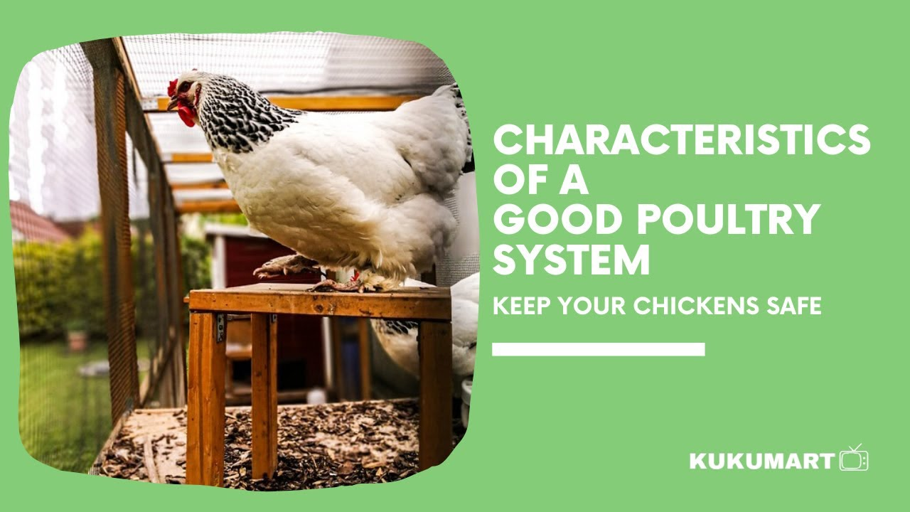 Poultry Feed Formulation Software Free Download