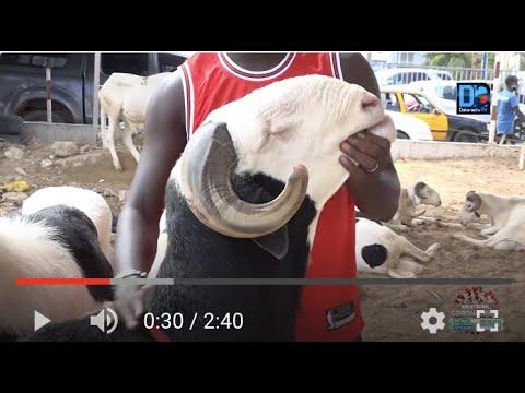 Tabaski ''J'ai vendu des moutons à 2,5 millions l'unité Sora Alé Ndiaye, éleveur