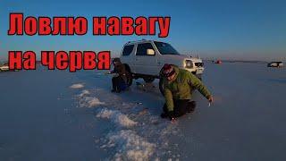 Зимняя рыбалка на червя на море Тавричанка приморский край
