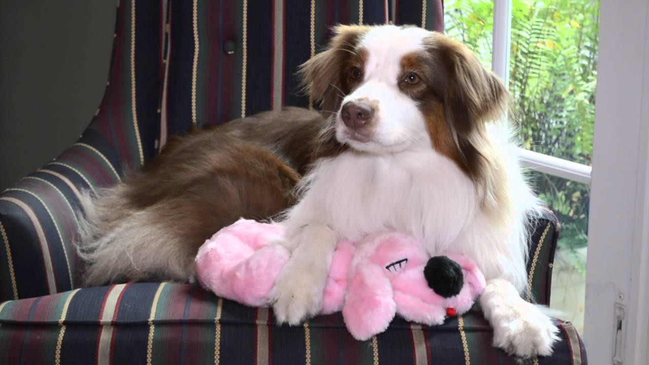 Coupaw Plush Heartbeat Dog Toy 1 Youtube