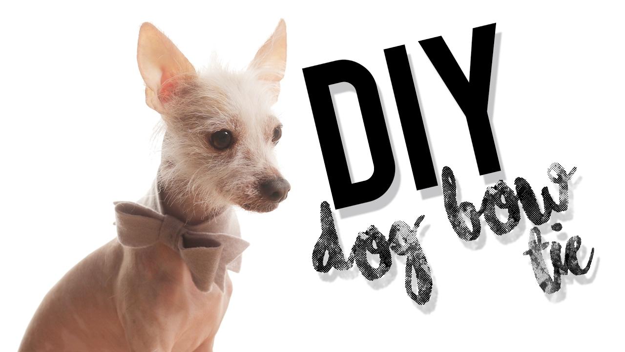 DIY No Sew Dog Pet Bow Tie Collar