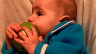 первый прикорм. яблоко