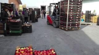 одном купить фрукты на овощебазе в спб характеристика Дальнего Востока