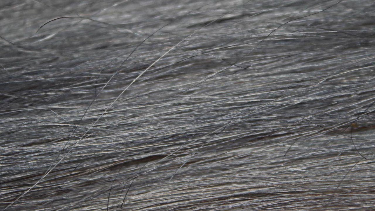 How To Color Extensions Grey Titanium Ion Color