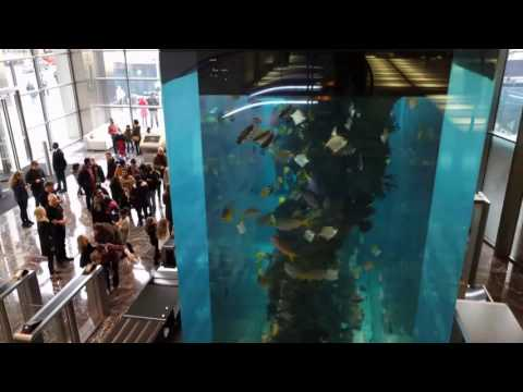 Heron Tower - Fish Tank - Christmas