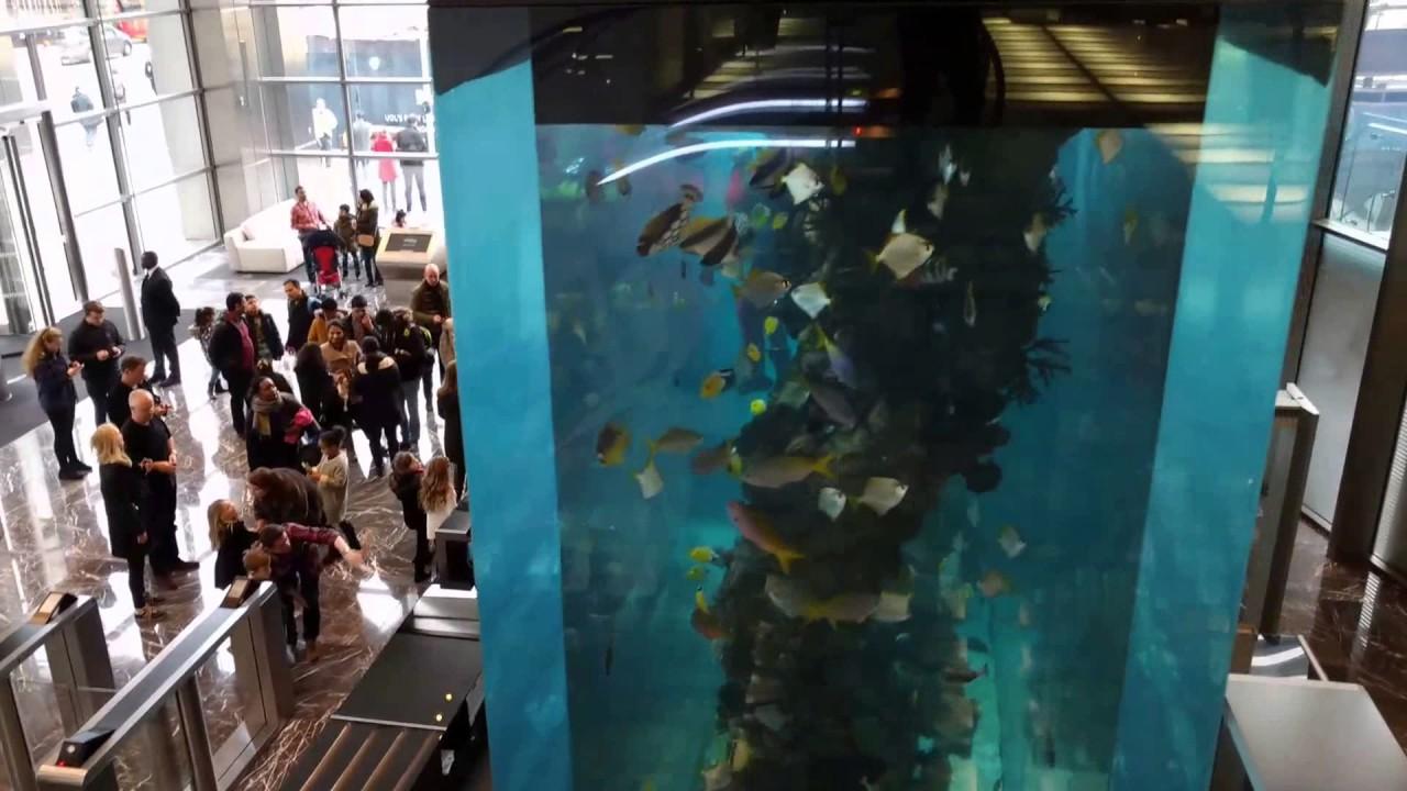 Heron tower fish tank christmas youtube for Tower fish tank
