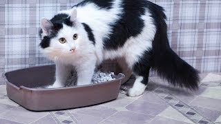 Why a Cat Stops Using Its Litter Box | Cat Care