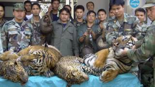 Hmong Report: Illegal Hunting in Laos Nov 03 2016