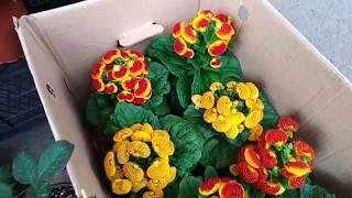 Комнатные цветы. Цветочный рынок в феврале .