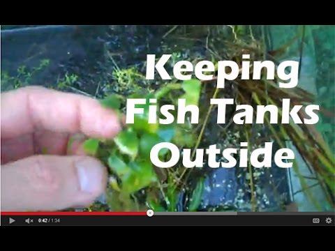 How To Keep FIsh Tanks Outside, Aquariums Outside   YouTube